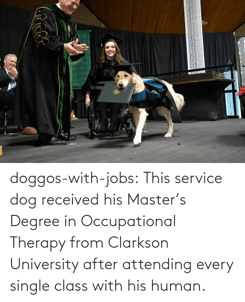 university: doggos-with-jobs:  This service dog received his Master's Degree in Occupational Therapy from Clarkson University after attending every single class with his human.