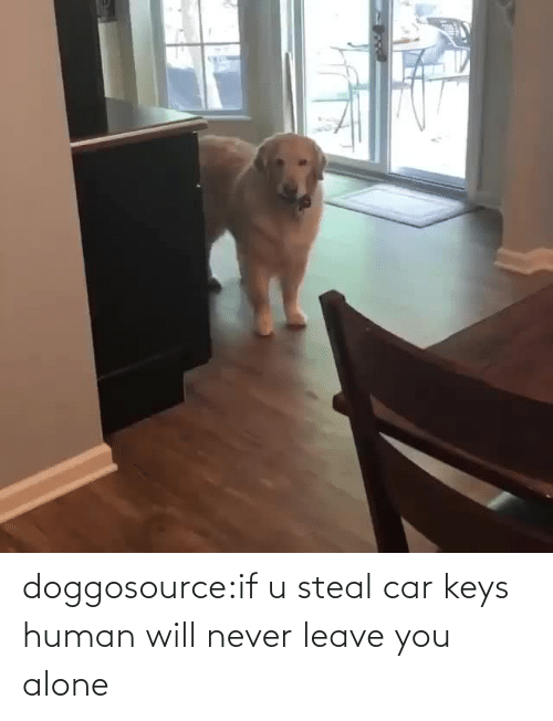 car: doggosource:if u steal car keys human will never leave you alone