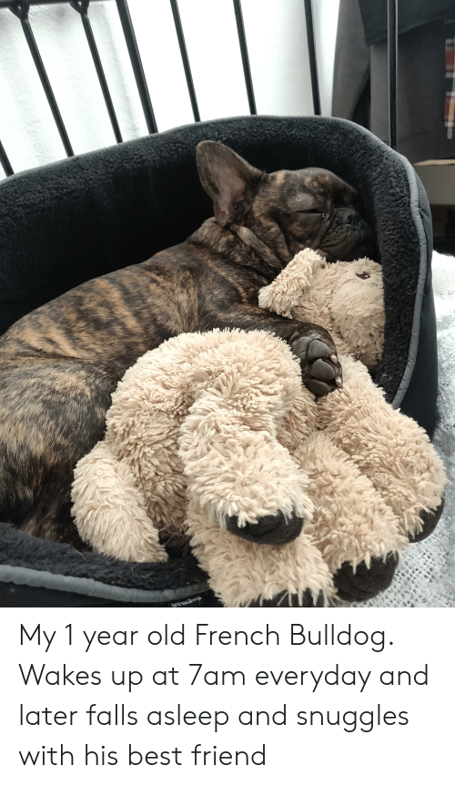 Best Friend, Best, and Bulldog: dogman My 1 year old French Bulldog. Wakes up at 7am everyday and later falls asleep and snuggles with his best friend