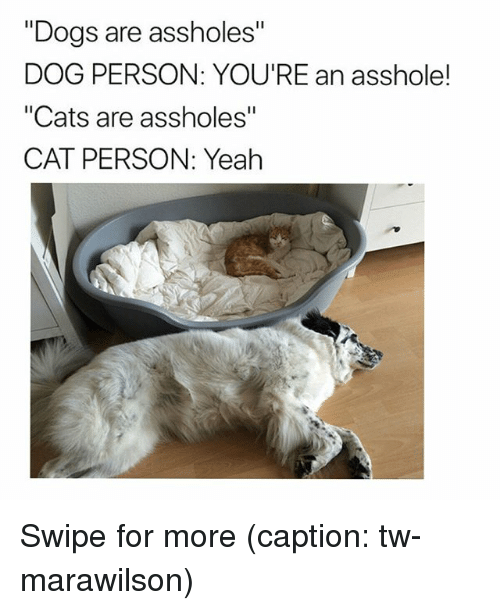 "Cats, Dogs, and Funny: ""Dogs are assholes""  DOG PERSON: YOU'RE an asshole!  ""Cats are assholes""  CAT PERSON: Yeah Swipe for more (caption: tw-marawilson)"