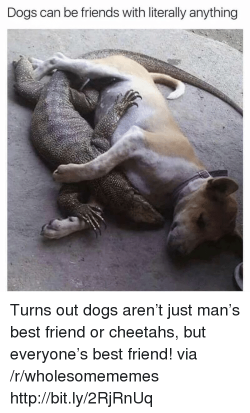 Best Friend, Dogs, and Friends: Dogs can be friends with literally anything Turns out dogs aren't just man's best friend or cheetahs, but everyone's best friend! via /r/wholesomememes http://bit.ly/2RjRnUq