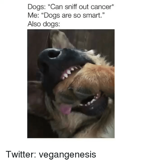 """Dogs, Memes, and Twitter: Dogs: *Can sniff out cancer*  Me: """"Dogs are so smart.""""  Also dogs:  15 Twitter: vegangenesis"""