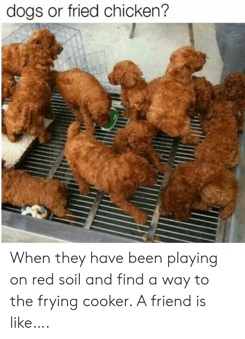 Dogs, Chicken, and Been: dogs or fried chicken? When they have been playing on red soil and find a way to the frying cooker.  A friend is like….
