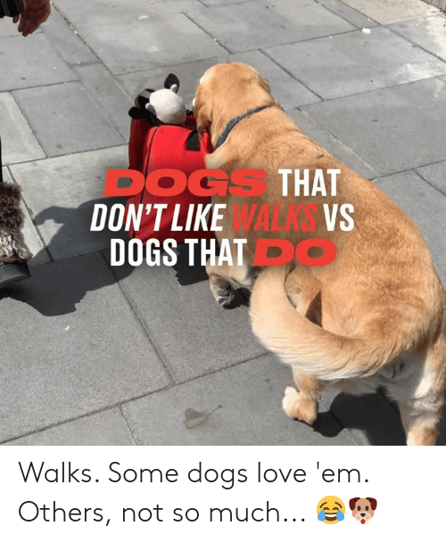 Dank, Dogs, and Love: DOGS THAT  DON'T LIKE WALKS VS  DOGS THAT Walks. Some dogs love 'em. Others, not so much... 😂🐶