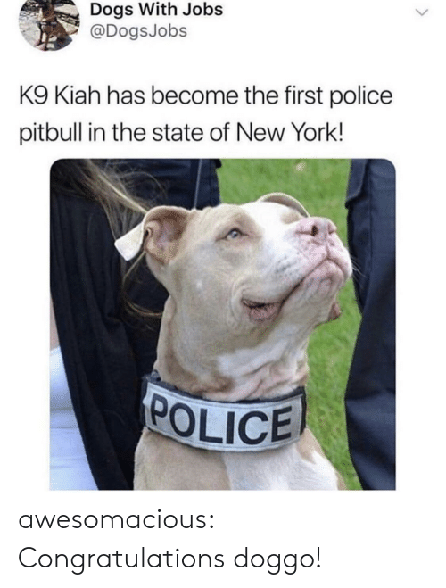 Dogs, New York, and Police: Dogs With Jobs  @DogsJobs  K9 Kiah has become the first police  pitbull in the state of New York!  POLICE awesomacious:  Congratulations doggo!