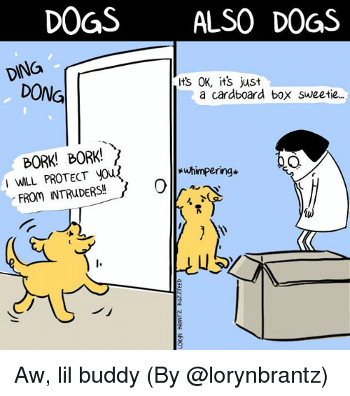 Bork Bork: DOGSALSO DOGS  DING  ts OK, its just  DONG  a cardboard box sweetie.  BORK! BORK!  I WILL PROTECT yous  *uhimpering*  uS  ノ」 Aw, lil buddy (By @lorynbrantz)