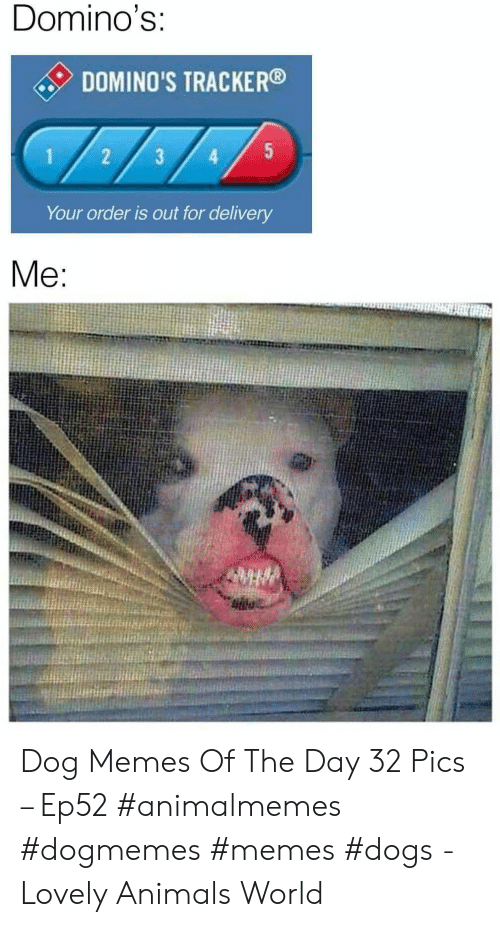 Domino's: Domino's:  DOMINO'S TRACKER  5  1  3  Your order is out for delivery  Me: Dog Memes Of The Day 32 Pics – Ep52 #animalmemes #dogmemes #memes #dogs - Lovely Animals World