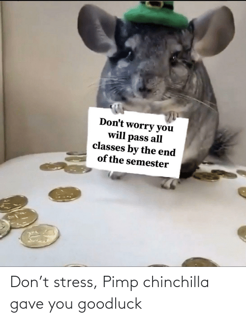 stress: Don't stress, Pimp chinchilla gave you goodluck
