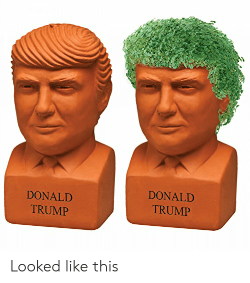 Donald Trump, Trump, and This: DONALD  DONALD  TRUMP  TRUMP Looked like this