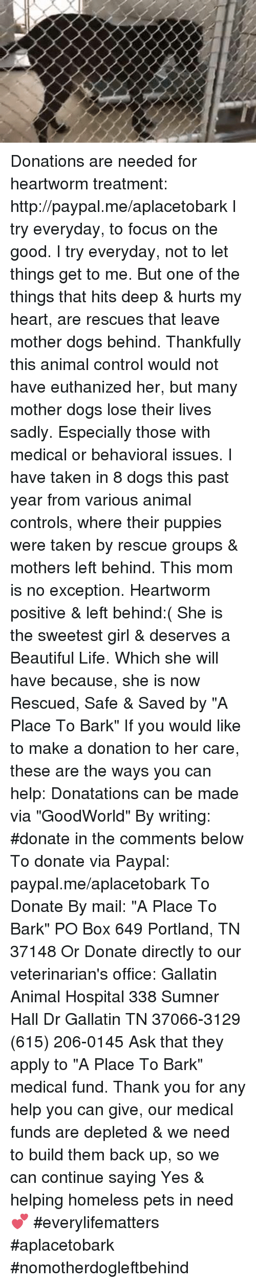 """Animals, Beautiful, and Boxing: Donations are needed for heartworm treatment: http://paypal.me/aplacetobark  I try everyday, to focus on the good. I try everyday, not to let things get to me. But one of the things that hits deep & hurts my heart, are rescues that leave mother dogs behind.  Thankfully this animal control would not have euthanized her, but many mother dogs lose their lives sadly.  Especially those with medical or behavioral issues. I have taken in 8 dogs this past year from various animal controls, where their puppies were taken by rescue groups & mothers left behind.  This mom is no exception.  Heartworm positive & left behind:( She is the sweetest girl & deserves a Beautiful Life.   Which she will have because, she is now Rescued, Safe & Saved by """"A Place To Bark"""" If you would like to make a donation to her care, these are the ways you can help: Donatations can be made via """"GoodWorld""""   By writing: #donate in the comments below To donate via Paypal: paypal.me/aplacetobark To Donate By mail:  """"A Place To Bark"""" PO Box 649 Portland, TN 37148 Or Donate directly to our veterinarian's office: Gallatin Animal Hospital 338 Sumner Hall Dr Gallatin TN 37066-3129 (615) 206-0145 Ask that they apply to  """"A Place To Bark"""" medical fund. Thank you for any help you can give, our medical funds are depleted & we need to build them back up, so we can continue saying Yes & helping homeless pets in need💕  #everylifematters #aplacetobark #nomotherdogleftbehind"""