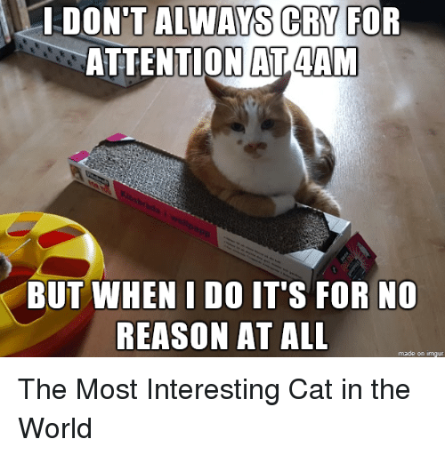 LOLcats: DON'T ALWASCRI FOR  ATTENTION AT4AM  BUT WHEN I DO IT'S FOR NO  REASON AT ALL  made on imgur The Most Interesting Cat in the World