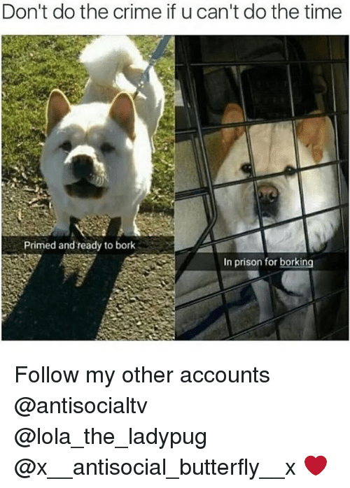 Borks: Don't do the crime if u can't do the time  Primed and ready to bork  In prison for borking Follow my other accounts @antisocialtv @lola_the_ladypug @x__antisocial_butterfly__x ❤️