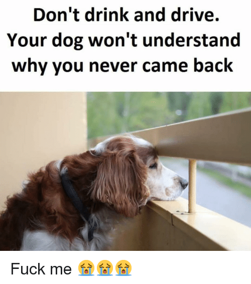 Memes, Drive, and Fuck: Don't drink and drive.  Your dog won't understand  why you never came back Fuck me 😭😭😭