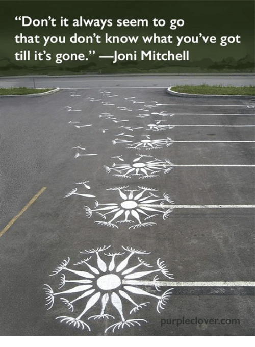 """Joni: """"Don't it always seem to go  that you don't know what you've got  till it's gone.  Joni Mitchell  purple clover com"""