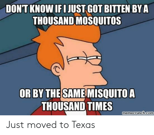 mosquitos: DONT KNOW IF I JUST GOT BITTEN BYA  THOUSAND MOSQUITOS  OR BY THESAMEMISQUITOA  THOUSAND TIMES  memecrunch.com Just moved to Texas