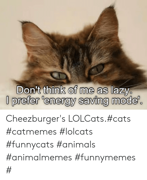 LOLcats: Don't think of me as lazy  prefer 'energy saving mode'. Cheezburger's LOLCats.#cats #catmemes #lolcats #funnycats #animals #animalmemes #funnymemes #