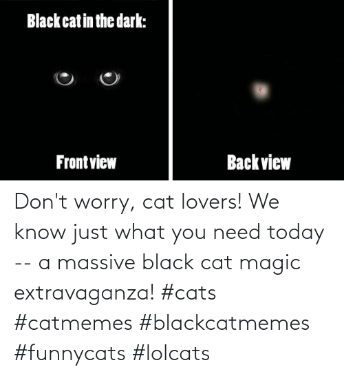 massive: Don't worry, cat lovers! We know just what you need today -- a massive black cat magic extravaganza! #cats #catmemes #blackcatmemes #funnycats #lolcats