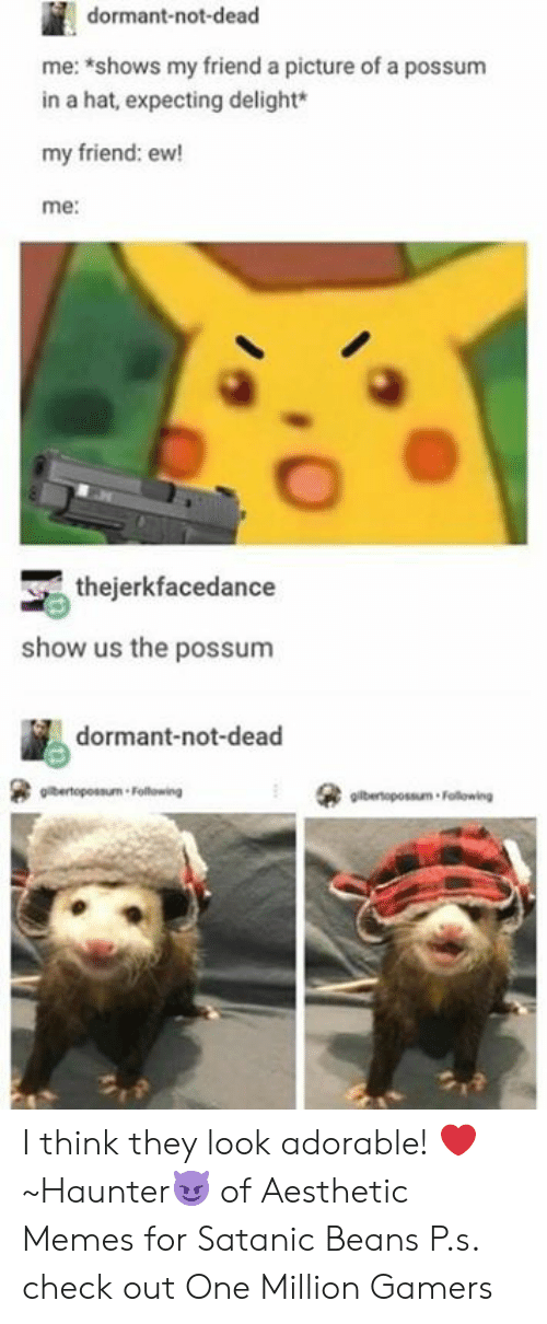 Dank, Memes, and Aesthetic: dormant-not-dead  me: shows my friend a picture of a possum  in a hat, expecting delight*  my friend: ew!  me:  thejerkfacedance  show us the possunm  dormant-not-dead  gilbertopossum Following I think they look adorable! ❤️  ~Haunter😈 of Aesthetic Memes for Satanic Beans  P.s. check out One Million Gamers