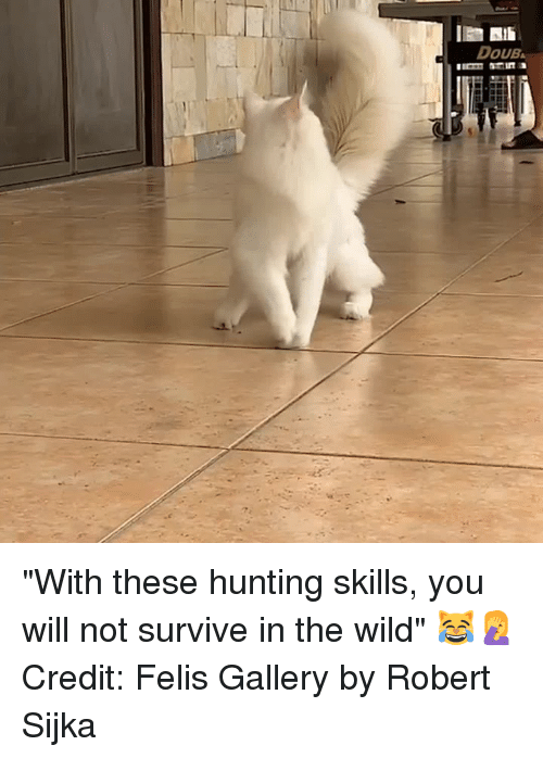 "Hunting, Wild, and Will: DOUB ""With these hunting skills, you will not survive in the wild"" 😹🤦‍♀️  Credit: Felis Gallery by Robert Sijka"