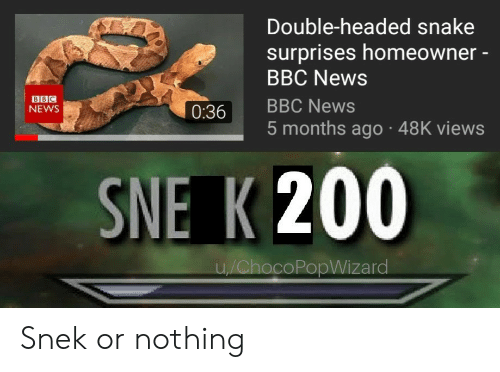 Bailey Jay, News, and Bbc News: Double-headed snake  surprises homeowner -  BBC News  BBC  NEWS  0:36 BBC News  5 months ago 48K views  SNE K 200  coPopWizard Snek or nothing