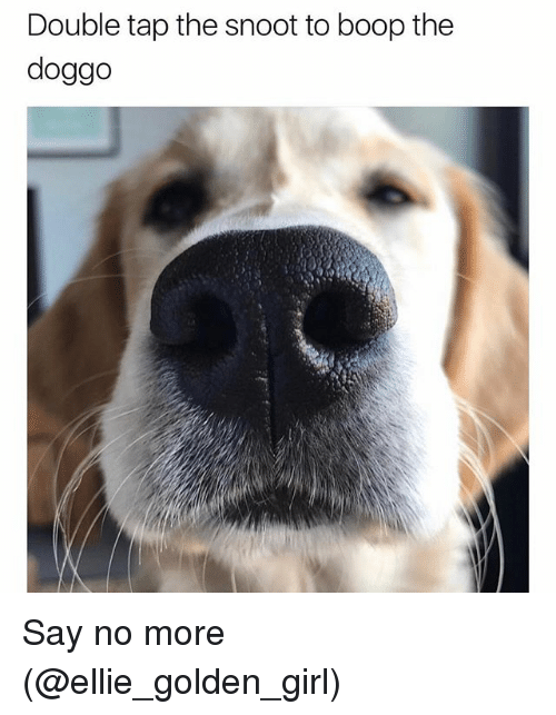 Girl, Say No More, and Dank Memes: Double tap the snoot to boop the  doggo Say no more (@ellie_golden_girl)