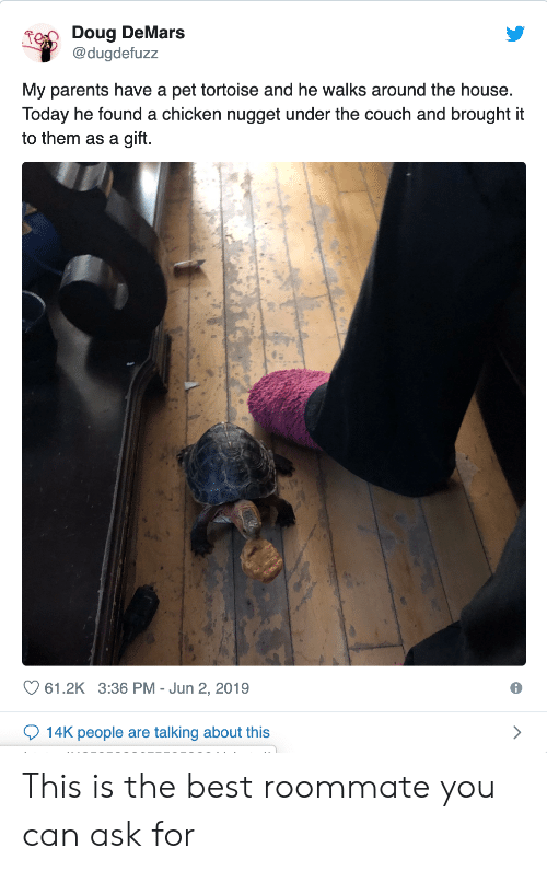 tortoise: Doug DeMars  @dugdefuzz  My parents have a pet tortoise and he walks around the house.  Today he found a chicken nugget under the couch and brought it  to them as a gift.  61.2K 3:36 PM Jun 2, 2019  14K people are talking about this This is the best roommate you can ask for
