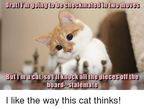 stalemate: Drat going to be checkmated Intwomoves  But I'ma cat, Solill knock all the pieces off the  board stalemate I like the way this cat thinks!