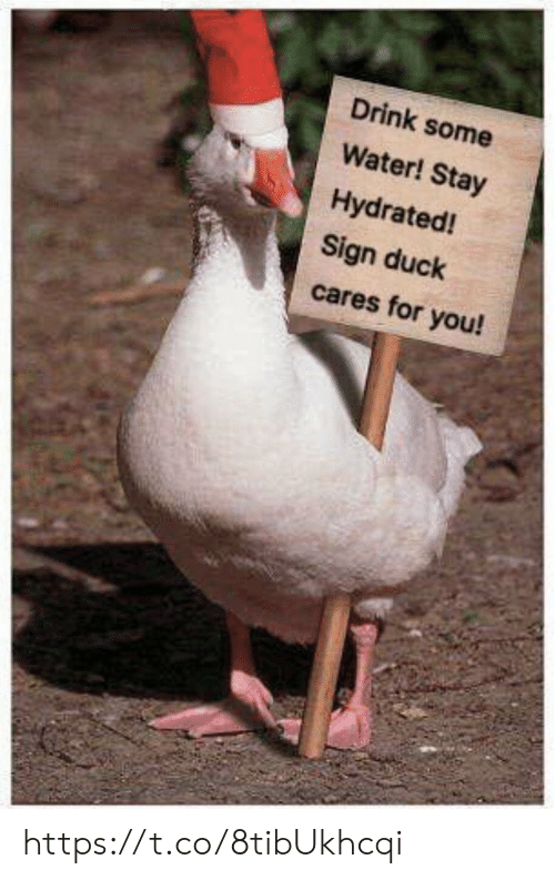 Memes, Duck, and Water: Drink some  Water! Stay  Hydrated!  Sign duck  cares for you! https://t.co/8tibUkhcqi