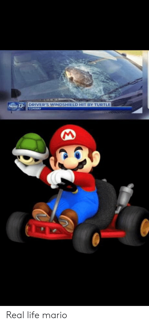 drivers: DRIVER'S WINDSHIELD HIT BY TURTLE  CONWAY  Nows 13- Real life mario