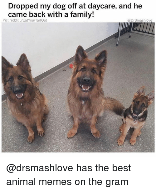 Family, Memes, and Reddit: Dropped my dog off at daycare, and he  came back with a family!  Pic: reddit u/EatYourTartOut  @DrSmashlove @drsmashlove has the best animal memes on the gram