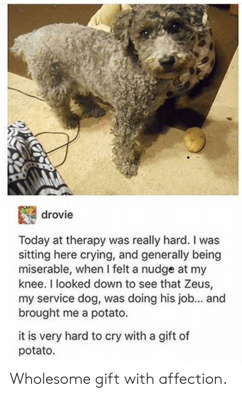 Nudge: drovie  Today at therapy was really hard. I was  sitting here crying, and generally being  miserable, when I felt a nudge at my  knee. I looked down to see that Zeus,  my service dog, was doing his job... an  brought me a potato.  it is very hard to cry with a gift of  potato. Wholesome gift with affection.