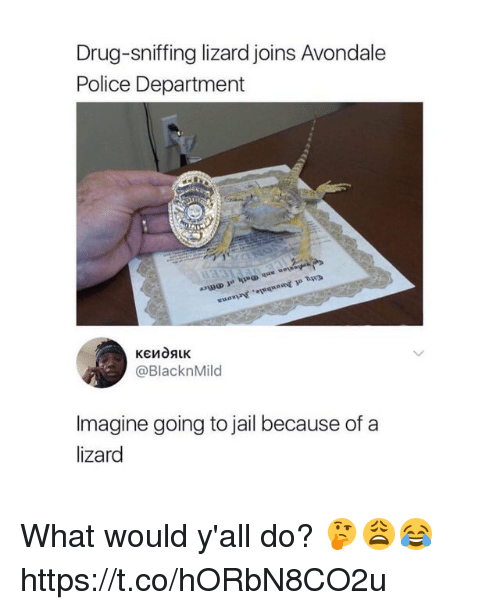 Jail, Police, and Drug: Drug-sniffing lizard joins Avondale  Police Department  @BlacknMild  Imagine going to jail because of a  lizard What would y'all do? 🤔😩😂 https://t.co/hORbN8CO2u