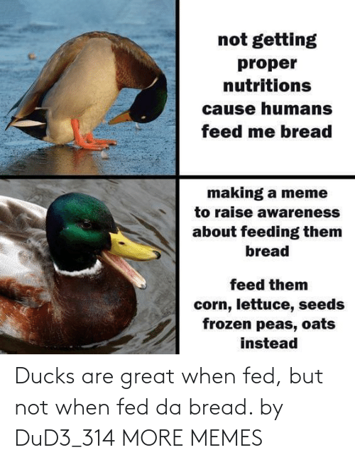 bread: Ducks are great when fed, but not when fed da bread. by DuD3_314 MORE MEMES