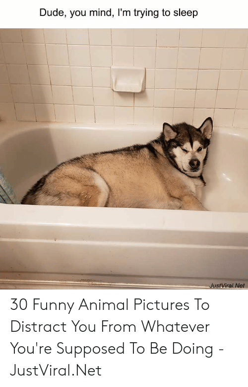 Dude, Funny, and Animal: Dude, you mind, I'm trying to sleep  JustViral.Net 30 Funny Animal Pictures To Distract You From Whatever You're Supposed To Be Doing - JustViral.Net