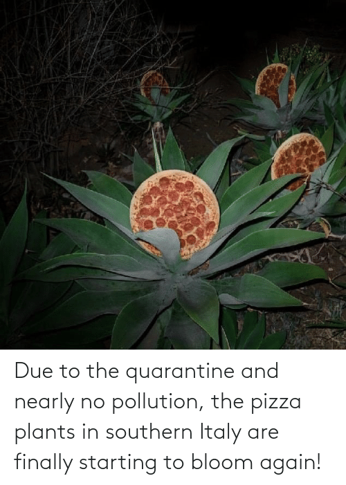 starting: Due to the quarantine and nearly no pollution, the pizza plants in southern Italy are finally starting to bloom again!