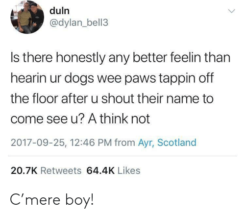 Dogs, Wee, and Scotland: duln  @dylan_bell3  Is there honestly any better feelin than  hearin ur dogs wee paws tappin off  the floor after u shout their name to  come see u? A think not  2017-09-25, 12:46 PM from Ayr, Scotland  20.7K Retweets 64.4K Likes C'mere boy!
