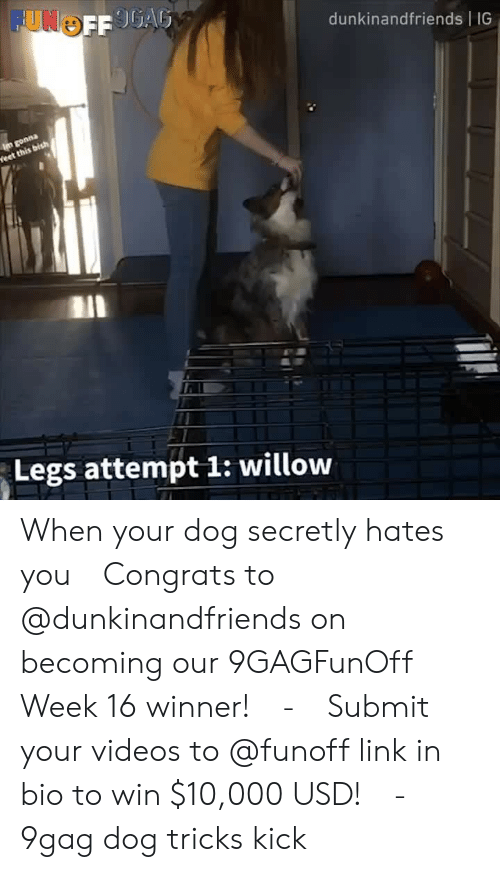 willow: dunkinandfriends IG  Legs attempt 1: willow When your dog secretly hates you⠀ Congrats to @dunkinandfriends on becoming our 9GAGFunOff Week 16 winner!⠀ -⠀ Submit your videos to @funoff link in bio to win $10,000 USD!⠀ -⠀ 9gag dog tricks kick