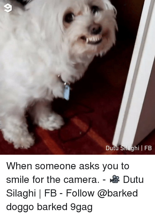 9gag, Memes, and Camera: Dutu Silaghi FB When someone asks you to smile for the camera. - 🎥 Dutu Silaghi | FB - Follow @barked doggo barked 9gag