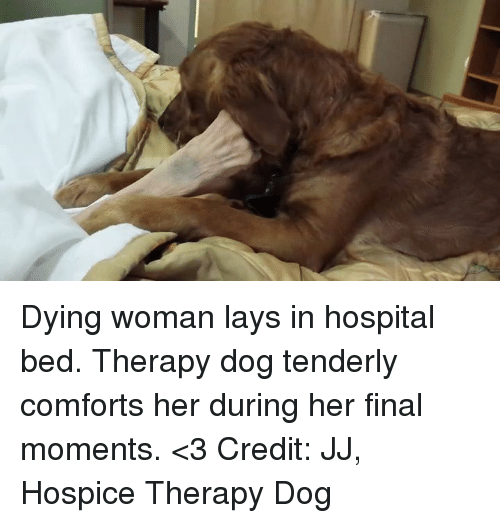 Comfortable, Lay's, and Memes: Dying woman lays in hospital bed. Therapy dog tenderly comforts her during her final moments. <3  Credit: JJ, Hospice Therapy Dog