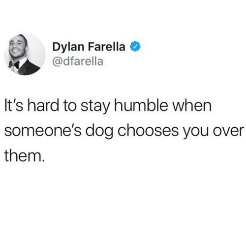 Humble, Dog, and Them: Dylan Farella  @dfarella  It's hard to stay humble when  someone's dog chooses you over  them