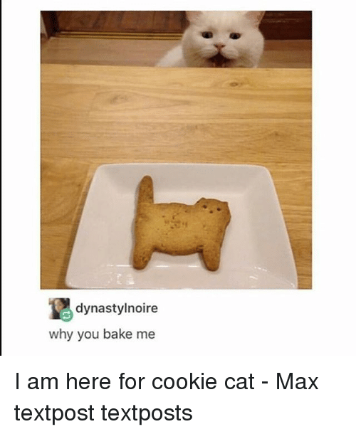 Memes, 🤖, and Cat: dynastylnoire  why you bake me I am here for cookie cat - Max textpost textposts
