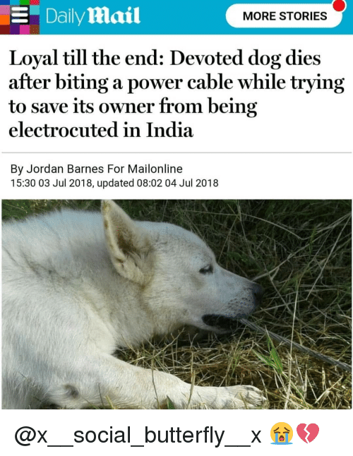 Memes, Butterfly, and India: E DailyMmail  MORE STORIES  Loyal till the end: Devoted dog dies  after biting a power cable while trying  to save its owner from being  electrocuted in India  By Jordan Barnes For Mailonline  15:30 03 Jul 2018, updated 08:02 04 Jul 2018 @x__social_butterfly__x 😭💔