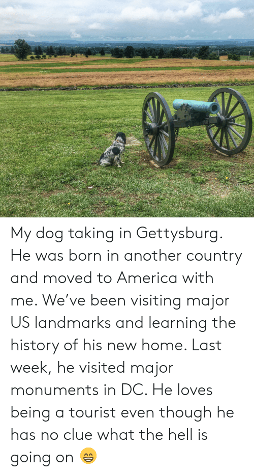 America, History, and Home: e My dog taking in Gettysburg. He was born in another country and moved to America with me. We've been visiting major US landmarks and learning the history of his new home. Last week, he visited major monuments in DC. He loves being a tourist even though he has no clue what the hell is going on 😁