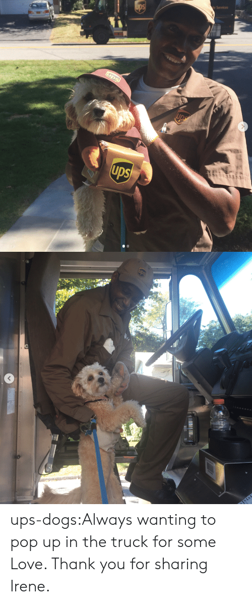 Dogs, Love, and Pop: e Services ups-dogs:Always wanting to pop up in the truck for some Love. Thank you for sharing Irene.