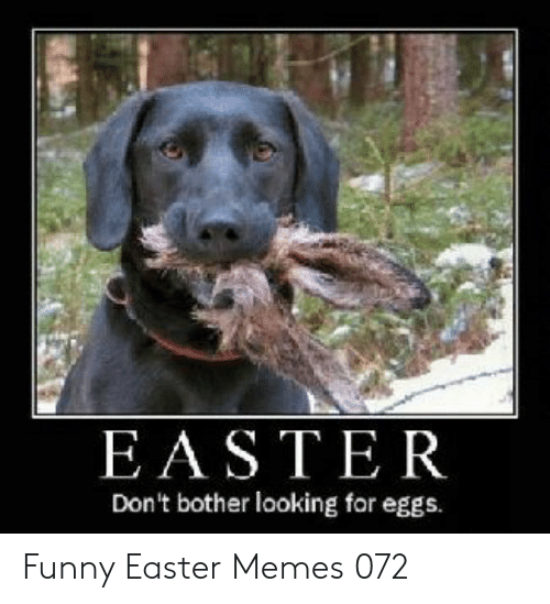 Easter, Funny, and Memes: EASTER  Don't bother looking for eggs. Funny Easter Memes 072