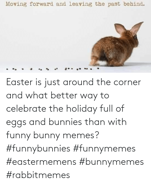 The Holiday: Easter is just around the corner and what better way to celebrate the holiday full of eggs and bunnies than with funny bunny memes? #funnybunnies #funnymemes #eastermemens #bunnymemes #rabbitmemes
