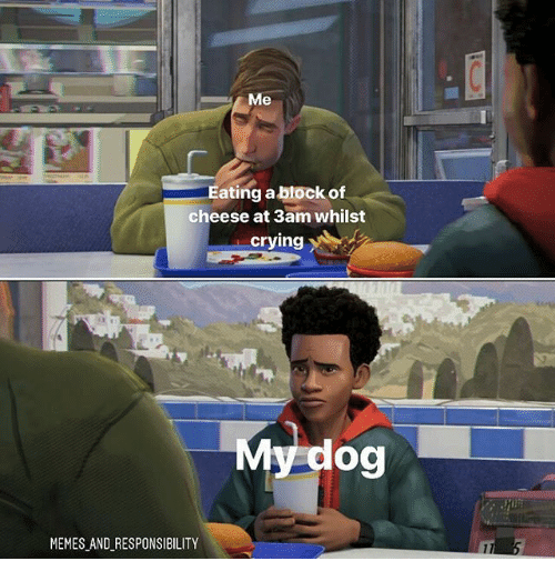 Crying, Memes, and Responsibility: Eating a block of  cheese at 3am whilst  crying  My dog  MEMES AND RESPONSIBILITY