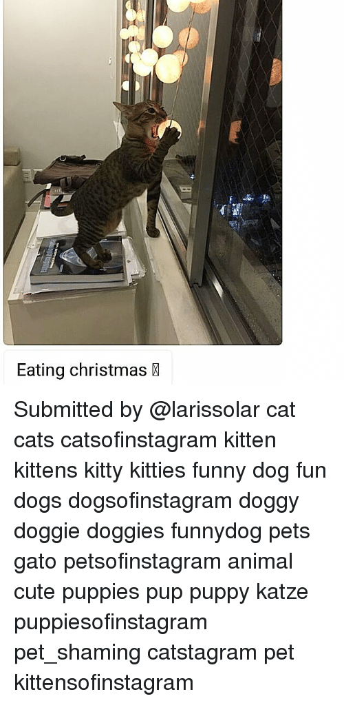Cats, Christmas, and Cute: Eating christmas Submitted by @larissolar cat cats catsofinstagram kitten kittens kitty kitties funny dog fun dogs dogsofinstagram doggy doggie doggies funnydog pets gato petsofinstagram animal cute puppies pup puppy katze puppiesofinstagram pet_shaming catstagram pet kittensofinstagram