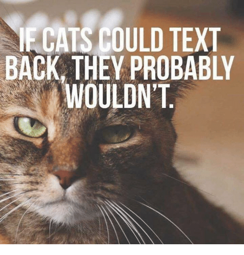 Memes, Text, and Text Back: ECATS COULD TEXT  BACK, THEY PROBABLY  WOULDN'T