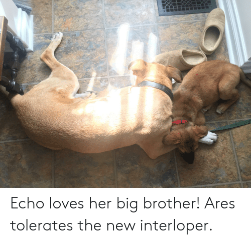 Big Brother, Her, and Echo: Echo loves her big brother! Ares tolerates the new interloper.